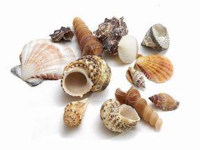 Muscheln als Naturdeko