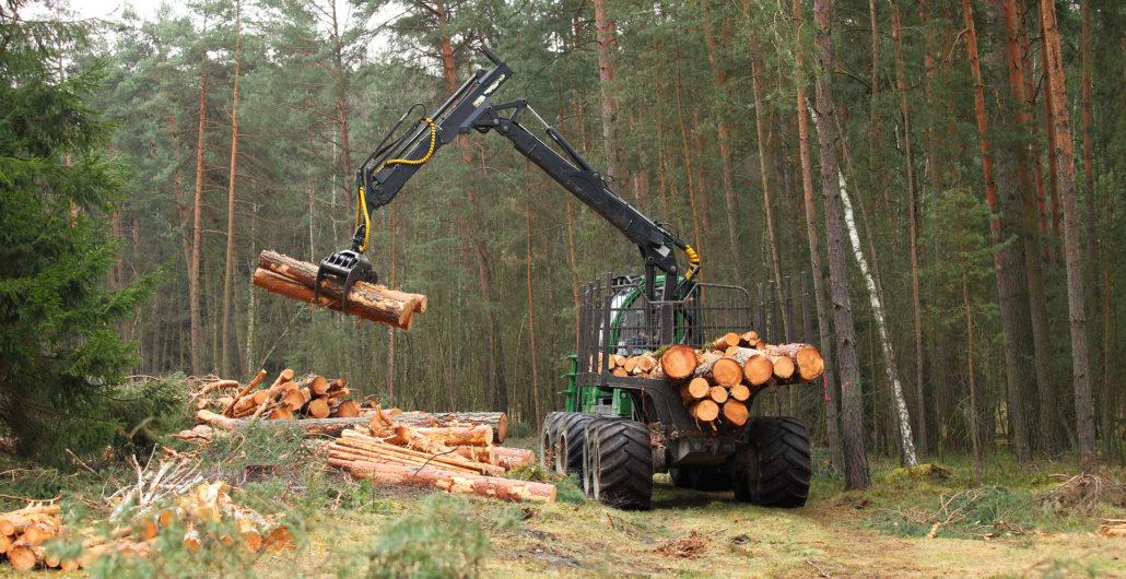 Harvester bei der Waldarbeit